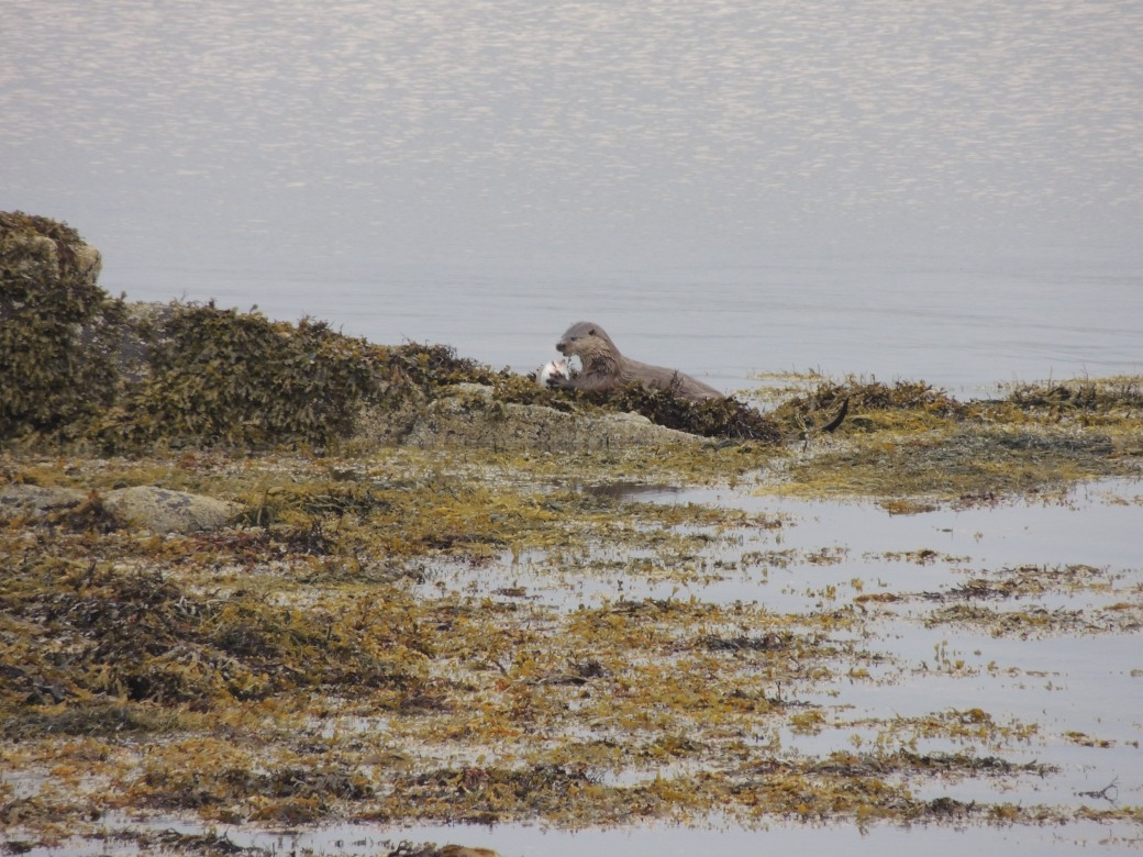 coll-and-mull-sept-2016-277