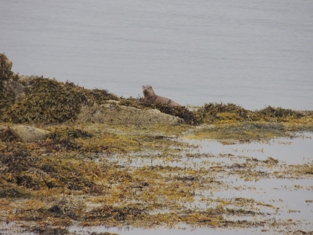 coll-and-mull-sept-2016-288