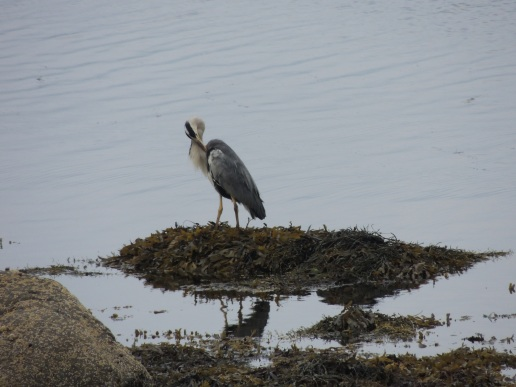 coll-and-mull-sept-2016-302