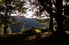 Near Milford Sound, NZ.